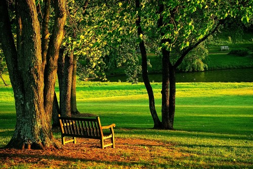 meadowlark-437252_1280